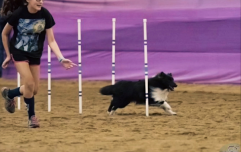 Emma guides her dog, Finn, as he weaves through poles in the nationwide 2017 NADAC competition.