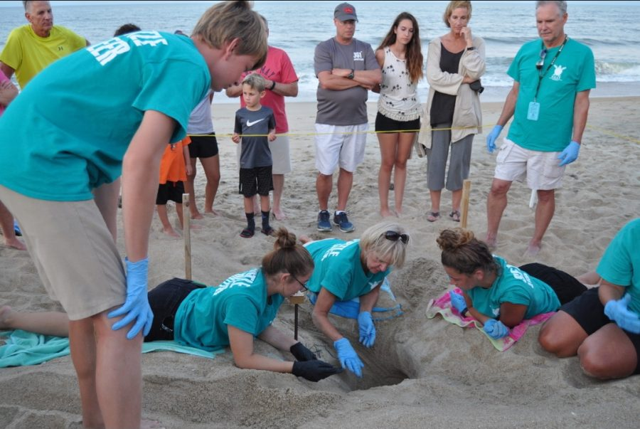 Ashby+King+and+other+NEST+volunteers+excavate+sea+turtle+nest+on+Jul.+30.