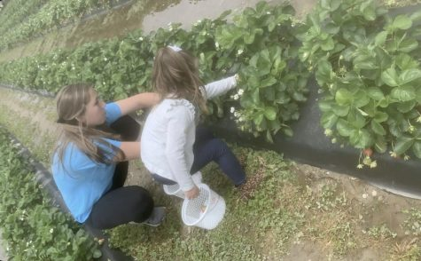 Kate Thoele with her niece Charlie picking strawberries on April 25.