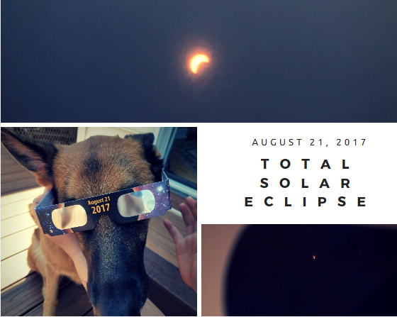 Photos by Makenna Miller, Pendleton Bright, Coral Maxey of  the solar eclipse on August 21, 2017 of the moon and sun line up and a dog wearing the special eclipses glasses from NASA.