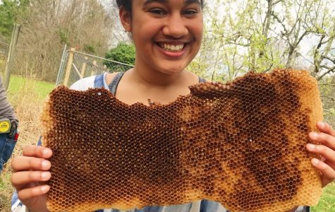 Lexi Thomas holds some honeycomb.