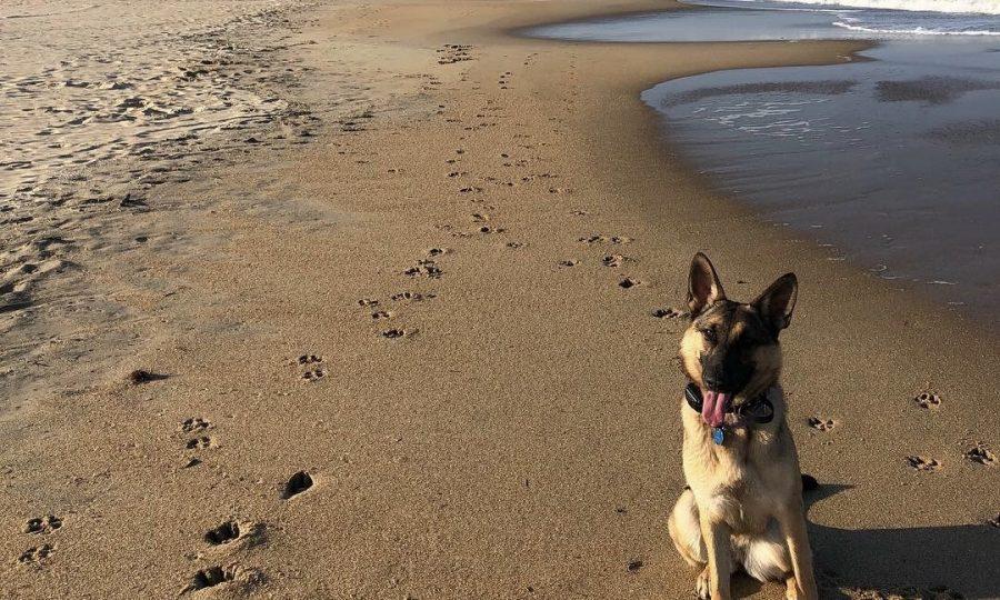 Senior Tayler Figo accompanies her dog for a walk on the beach. Photo on Sept. 19, 2018.