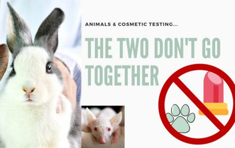 Beauty and Beasts, sad truth behind animal cosmetic testing