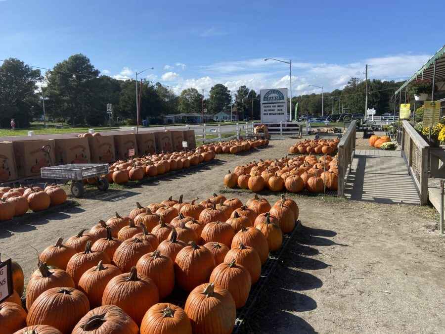 Locals visit the Hunt Club Farm pumpkin patch to purchase pumpkins on Oct. 21